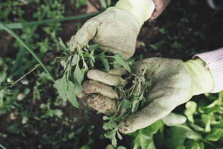 La phytosociologie soin des plantes par les plantes !
